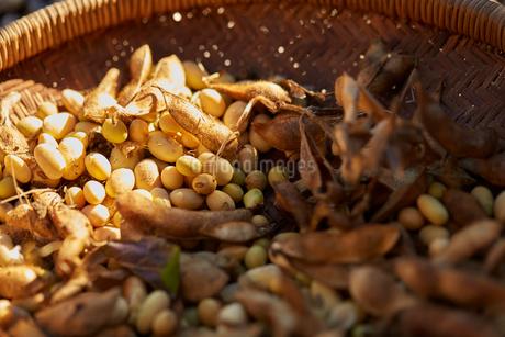 大豆の写真素材 [FYI02822629]