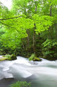 奥入瀬渓流流れの写真素材 [FYI02822993]