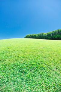 緑の芝生が広がる公園と青空の写真素材 [FYI02823038]