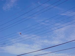 電線に佇むハトの写真素材 [FYI02823207]
