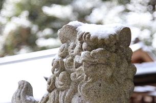 雪冠の狛犬の写真素材 [FYI02823288]