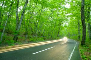 雨上がりの新緑の道とヘッドライトの明かりの写真素材 [FYI02823374]