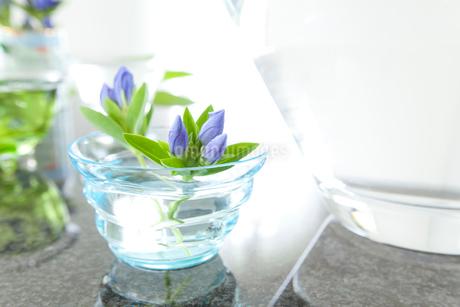 リンドウの花とガラスの器の写真素材 [FYI02823741]