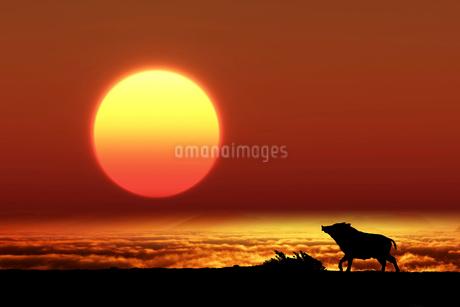 日の出とイノシシのシルエットのイラスト素材 [FYI02823780]