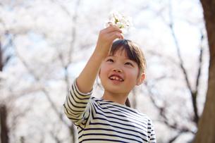 桜の花を見つめる女の子の写真素材 [FYI02823872]