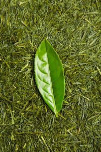 深蒸し煎茶の上にある茶葉の写真素材 [FYI02823922]