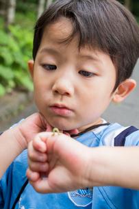 手についた虫を見つめる男の子の写真素材 [FYI02824001]