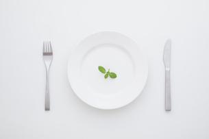 ミントの載ったお皿の写真素材 [FYI02824087]