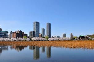 桜の咲く不忍池の写真素材 [FYI02824100]