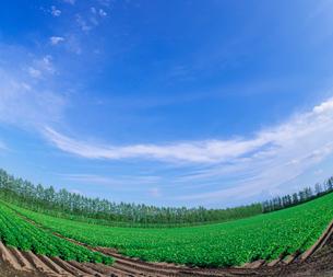 北海道 十勝平野 点景  広大な畑と青空 の写真素材 [FYI02824133]