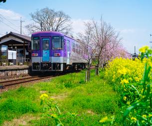 桜 (しだれ桜)と鉄道の写真素材 [FYI02824159]