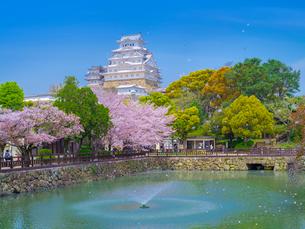 桜舞う姫路城の写真素材 [FYI02824209]