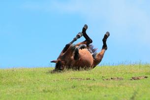 転がって背中をかく馬の写真素材 [FYI02824290]
