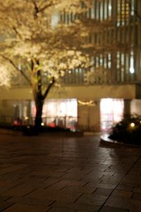 夜桜と石畳の広場の写真素材 [FYI02824306]