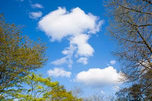 春の芽吹きと雲の写真素材 [FYI02824322]