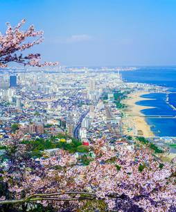 鉢伏山から桜 (ソメイヨシノ)と神戸市街遠望の写真素材 [FYI02824343]