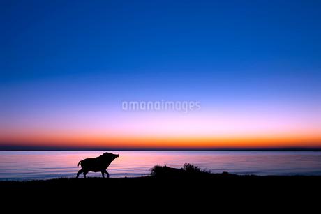 湖畔を散歩するイノシシのシルエットの写真素材 [FYI02824374]