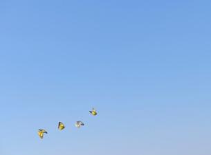 蝶と青空の写真素材 [FYI02824397]