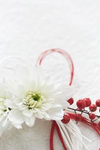 白い和紙上の水引と花の締縄の写真素材 [FYI02824529]