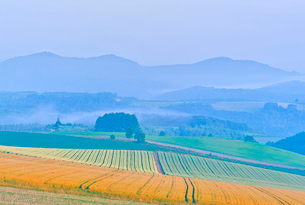 朝霧に煙る麦秋の畑と山並みの写真素材 [FYI02824625]