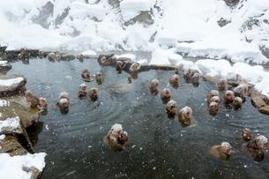 雪降りの中温泉に入るニホンザルの写真素材 [FYI02824646]