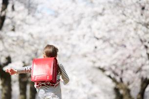 桜並木の道を走る小学生の女の子の後ろ姿の写真素材 [FYI02824650]