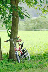 木陰に止まる自転車の写真素材 [FYI02824669]