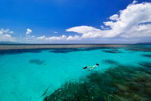 石西礁湖でシュノーケリング 竹富島沖の写真素材 [FYI02824676]