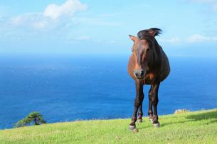 風に吹かれ立つ馬の写真素材 [FYI02824837]