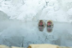 仲良しが寄り添って温泉に入るニホンザルの写真素材 [FYI02824906]