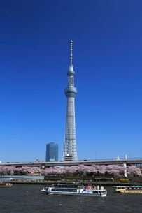サクラ咲く隅田川とスカイツリーの写真素材 [FYI02825020]
