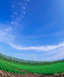 北海道 十勝平野 点景  広大な畑と青空 の写真素材 [FYI02825074]
