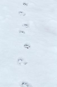 ニホンザルの足跡の写真素材 [FYI02825078]