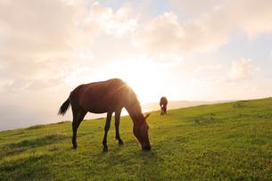 夕日の丘で食事中の馬の写真素材 [FYI02825101]