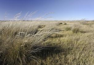 grassland, old Mongol capital, Yuan Shangdu or Xanaduの写真素材 [FYI02825313]