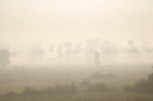 朝靄で覆われた平野の写真素材 [FYI02825374]