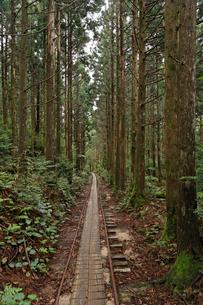 荒川林道のレール道の写真素材 [FYI02825387]