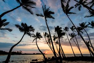 ヤシの木の間から見える夕日の写真素材 [FYI02825506]