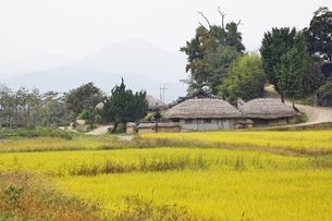 良洞民俗村と田園の写真素材 [FYI02825548]
