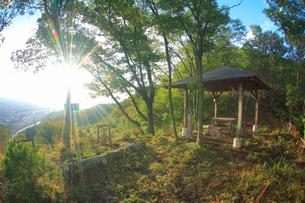 小牧城上の城と朝の木もれ日の写真素材 [FYI02825736]