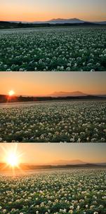 ジャガイモ畑と大雪山と朝日 定点の写真素材 [FYI02825798]