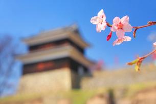 上田城の西櫓と桜の写真素材 [FYI02825851]