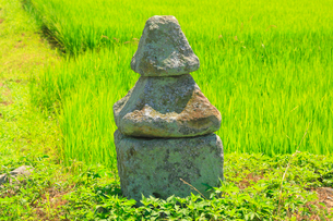 小島権兵衛の墓の写真素材 [FYI02826062]