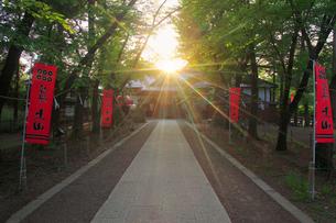 真田神社と夕日の木もれ日の写真素材 [FYI02826128]