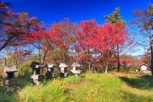 紅葉の陣場山城跡の神明宮の写真素材 [FYI02826137]