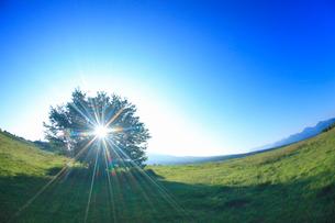 ダボスの丘の木立と朝日の木もれ日,魚眼レンズの写真素材 [FYI02826169]