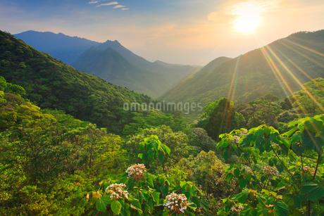 ヤマギリの花咲く新緑の原生林と船行前岳と明星岳と朝日の写真素材 [FYI02826191]