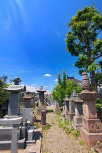 矢澤家墓所の写真素材 [FYI02826215]