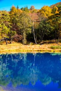 青い池と黄葉の写真素材 [FYI02826301]