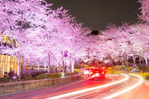 東京ミッドタウン,ライトアップの桜並木の写真素材 [FYI02826663]
